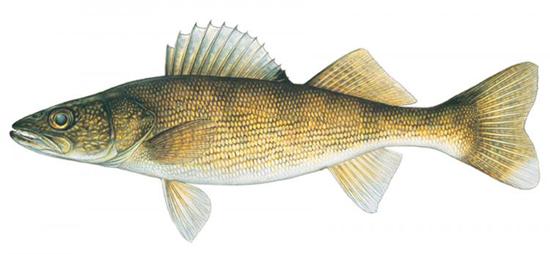 Bay De Noc Charters - Upper Michigan Fishing Charters Trips